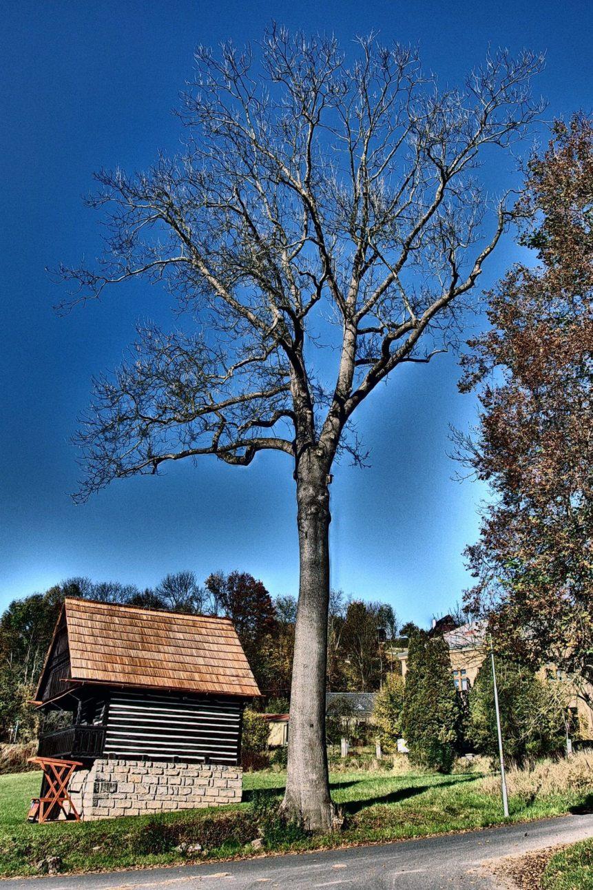 Free photo: Tree