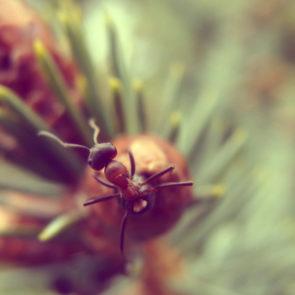 Free photo: Ant