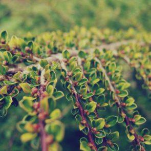 Free photo: Bush Tree