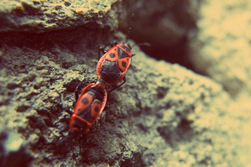 Free photo: Firebug