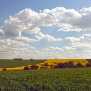 Free photo: Field