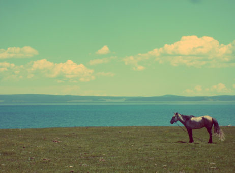 Horse At The Lake