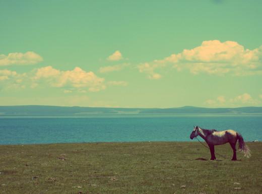 Free photo: Horse At The Lake