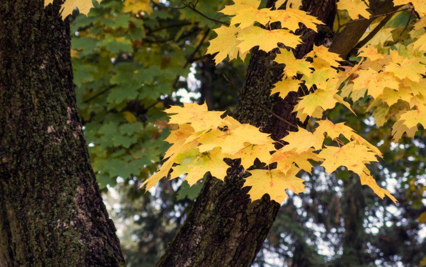 Free photo: Autumn Leaves