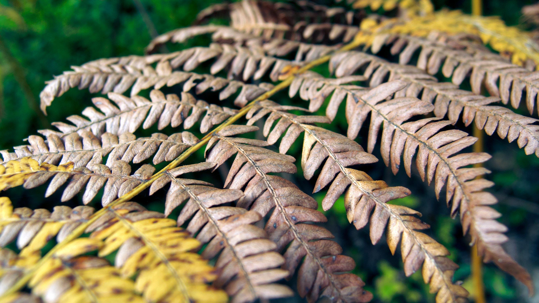 dead fern leaf free stock images by libreshot
