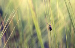 Free animals stock photo: Beetle In Grass