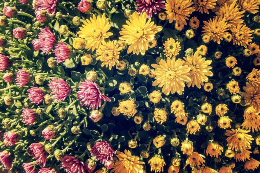 Free photo: Yellow Flowers