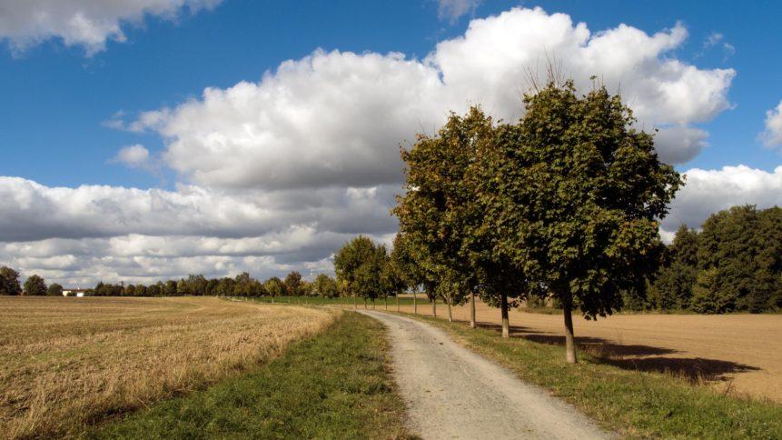 Free photo: Village path through the fields