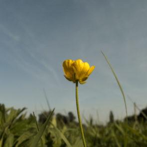 Free photo: Solitary Yellow Flower