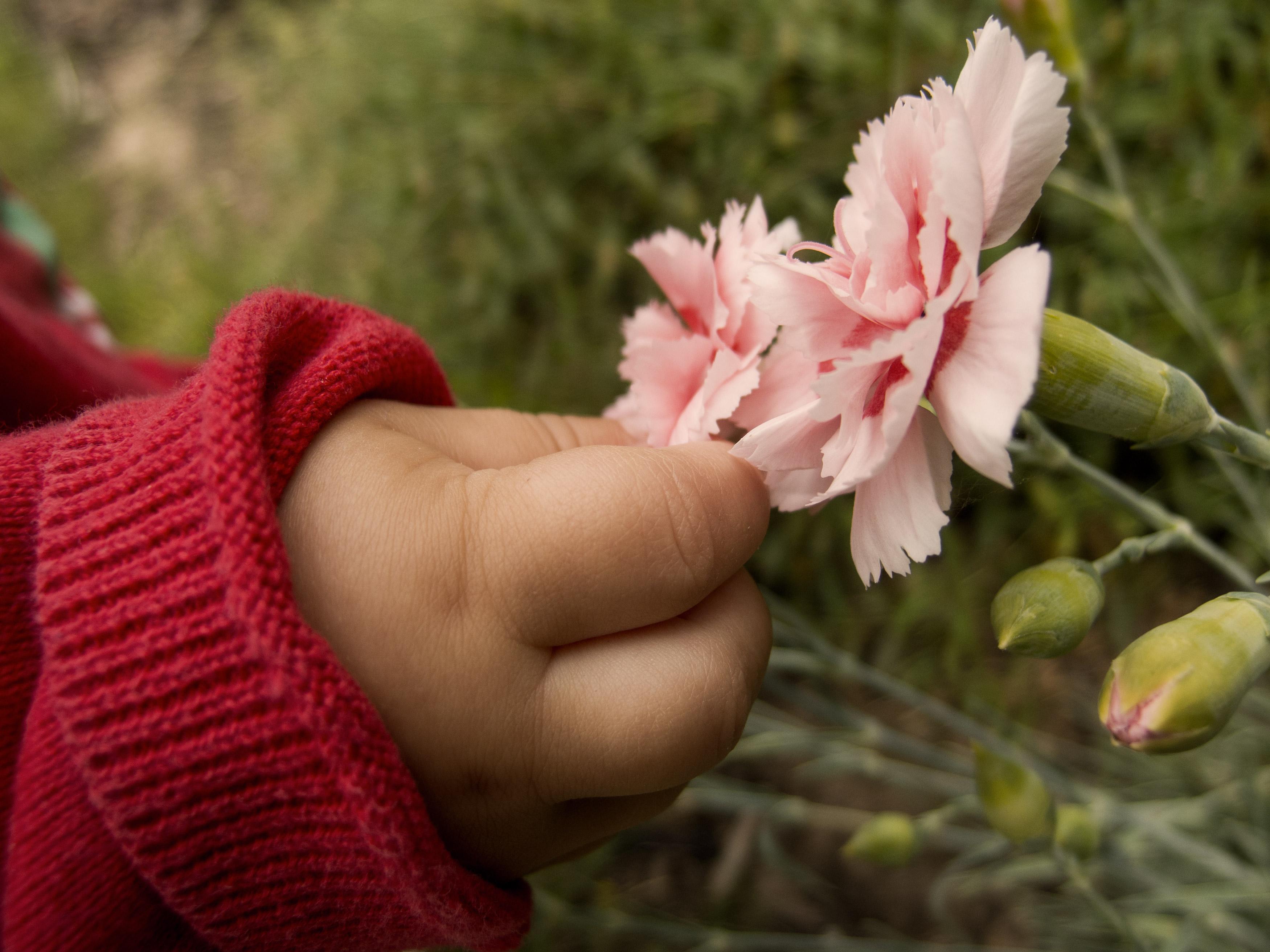 free image baby hand picking the flower libreshot public domain