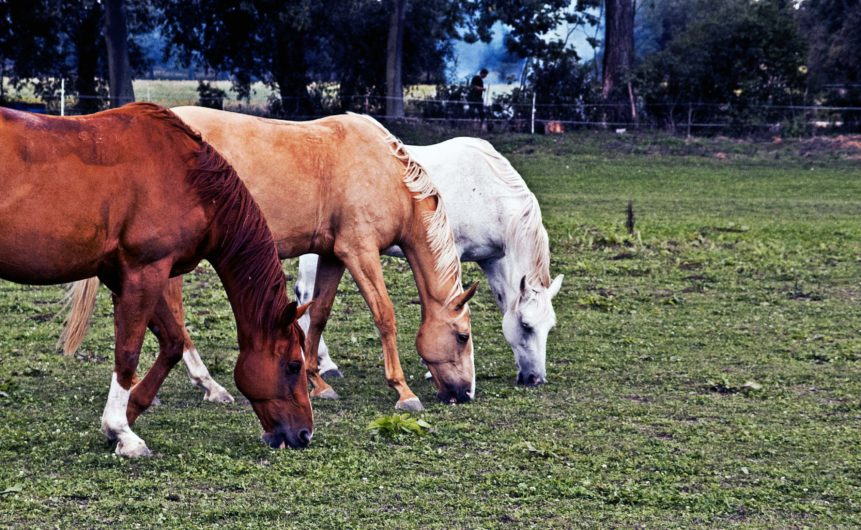Free photo: Grazing horses