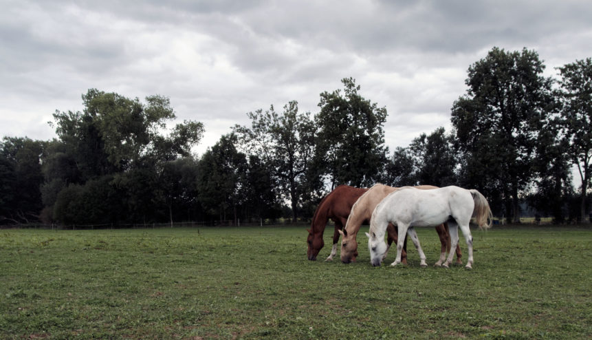Free photo: Three horses