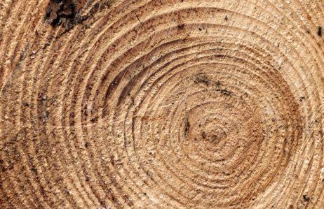 Wood cross section