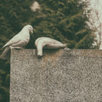 Dead pigeons on the grave