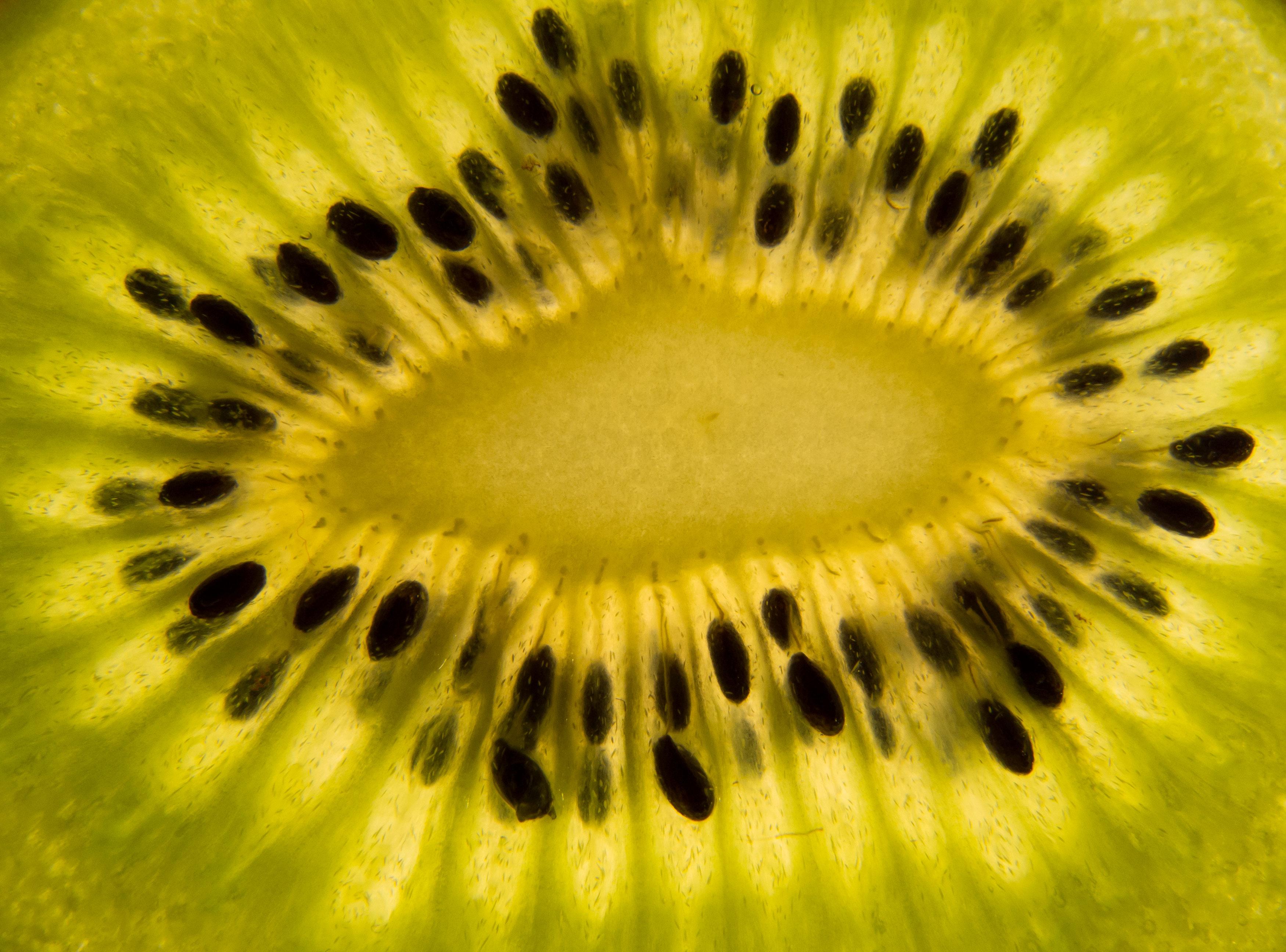 FREE IMAGE: Kiwi slice closeup | Libreshot Public Domain ...