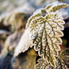 Hoarfrost on a leaf