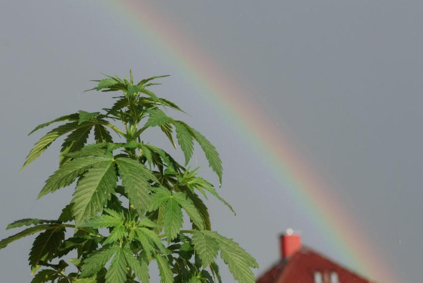 Marijuana And Rainbow