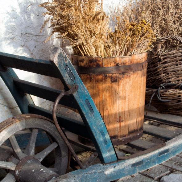 Wheelbarrow And Herbs On A Farm