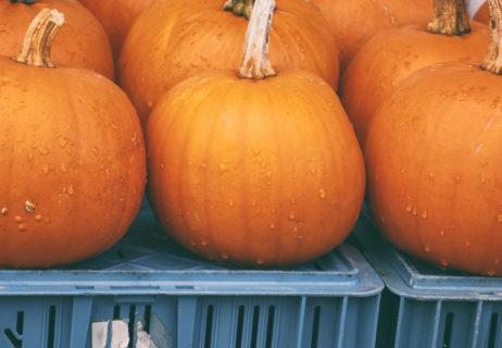 Pumpkins Stand