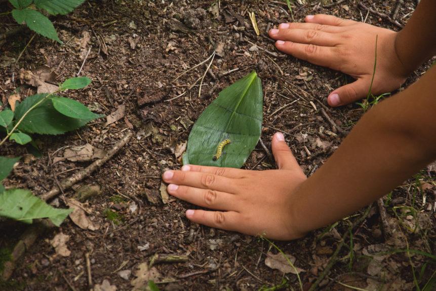 Children's hands on forest ground