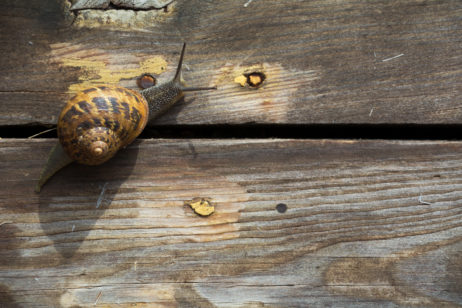 Snail on the wood