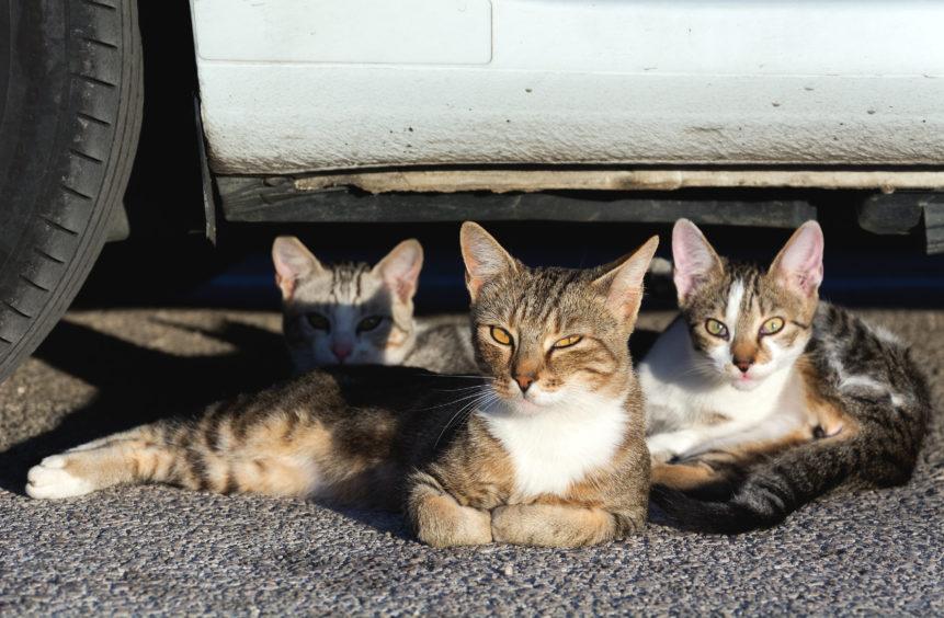 Three Street Cats