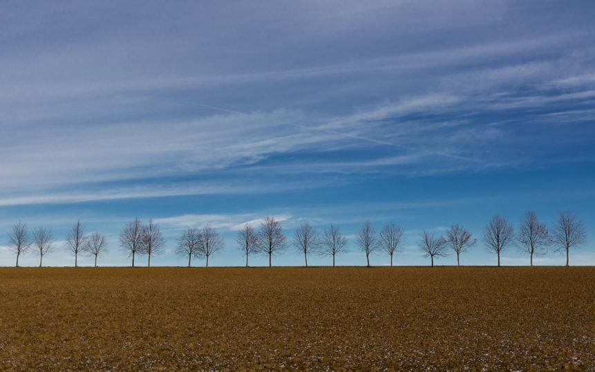 row of Trees on the horizon