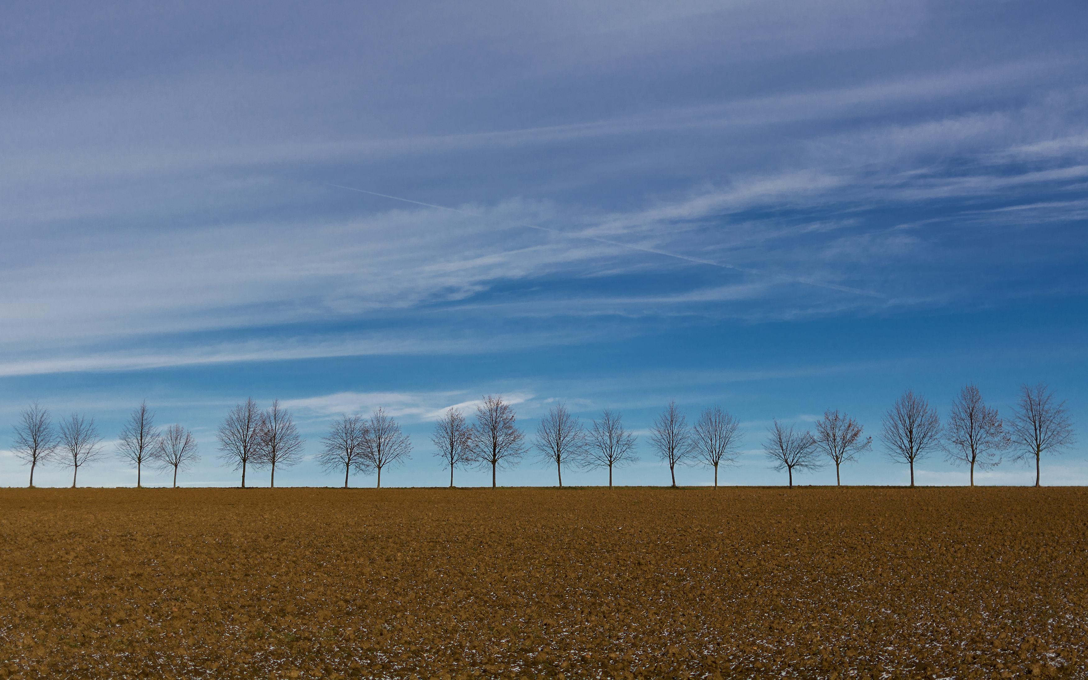 FREE IMAGE: Row of Trees on the Horizon - Libreshot Public ...