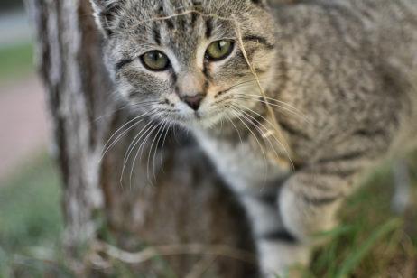 Curious Gray Cat