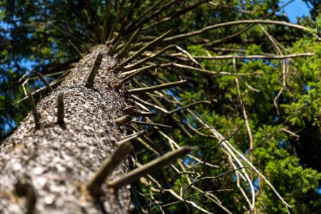 Close-up of a Tree