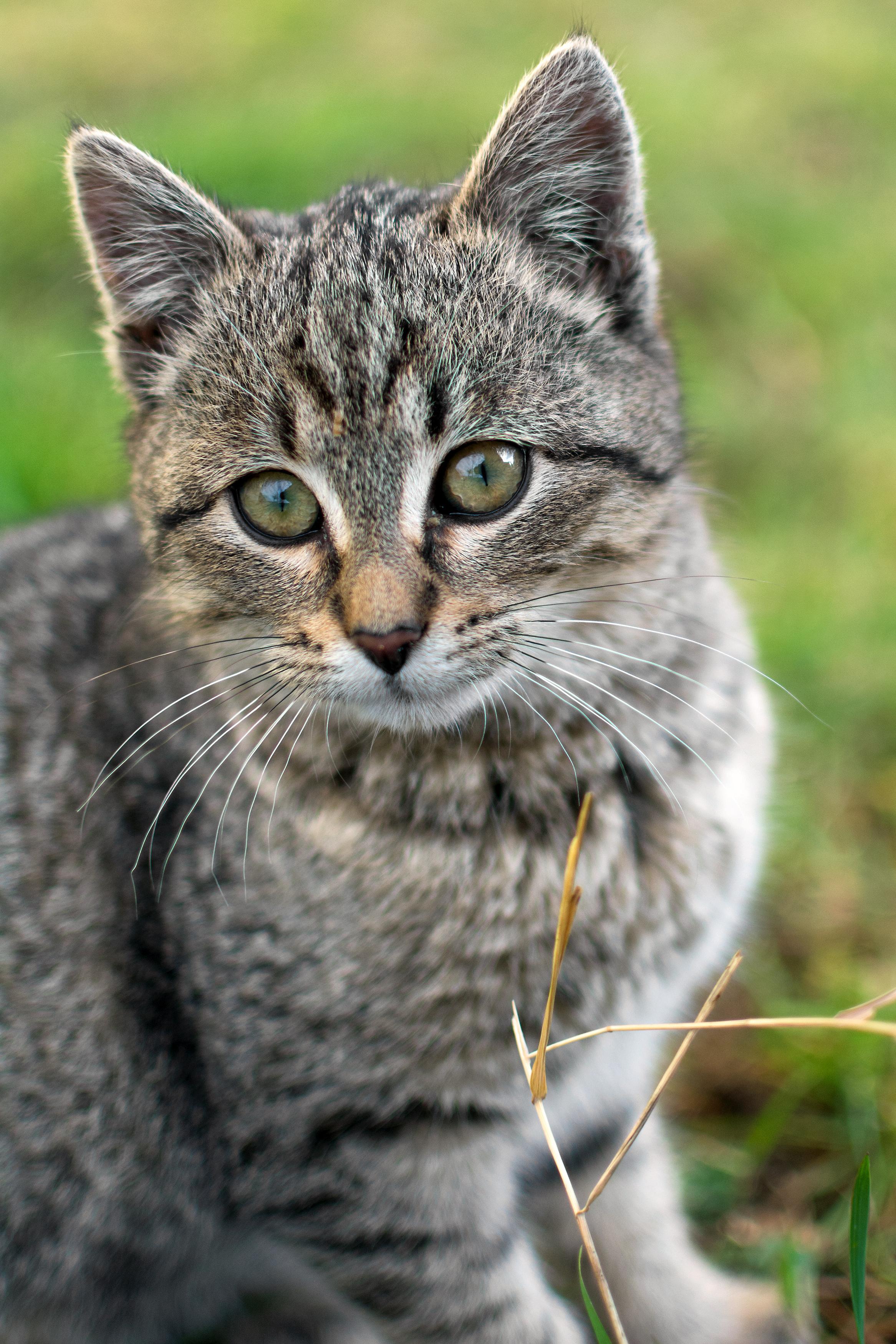 free image cute kitten portrait libreshot public domain photos