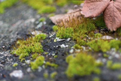 Moss Macro Photography