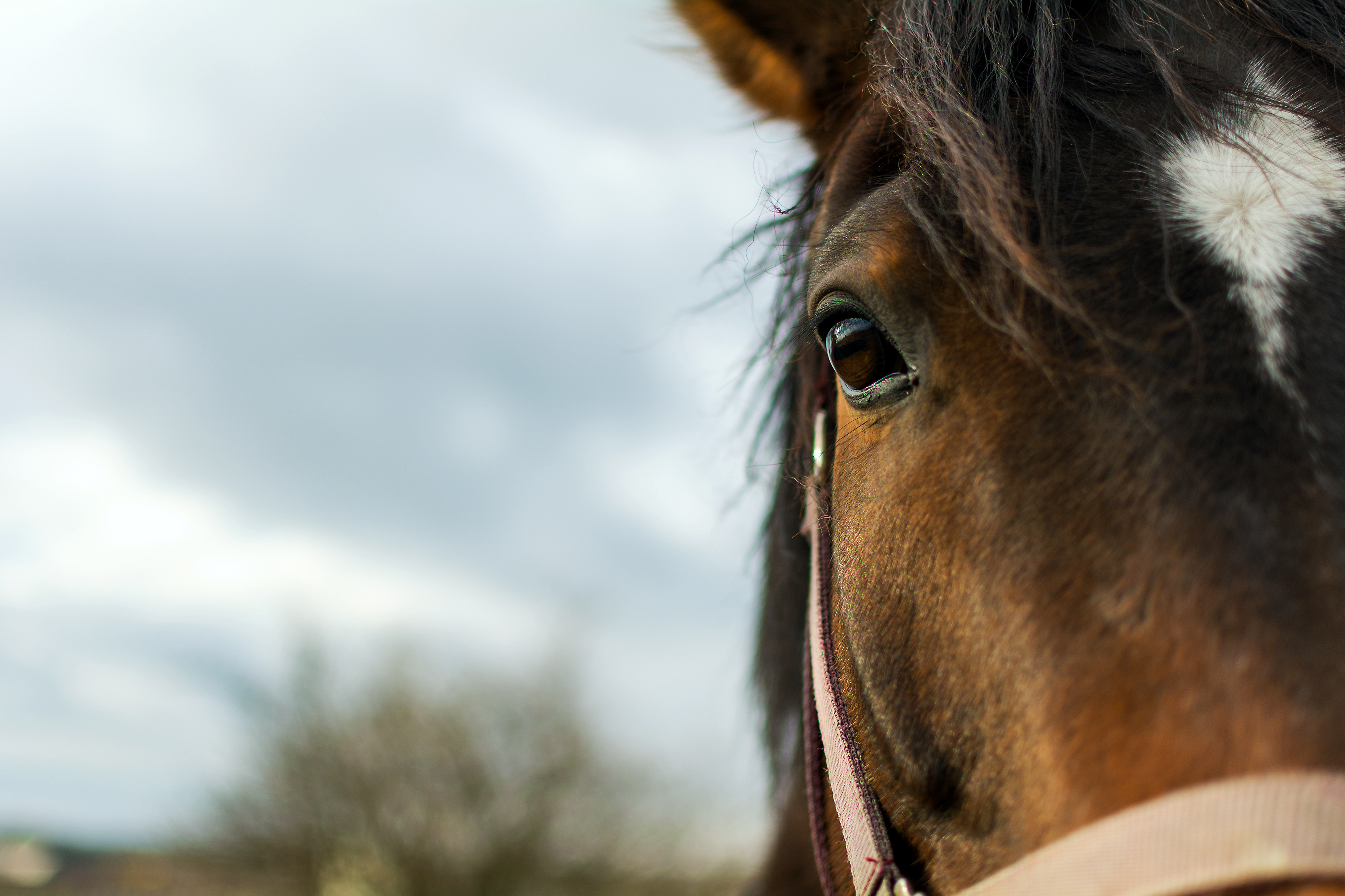 Half Horse Face | Free Stock Photo | LibreShot