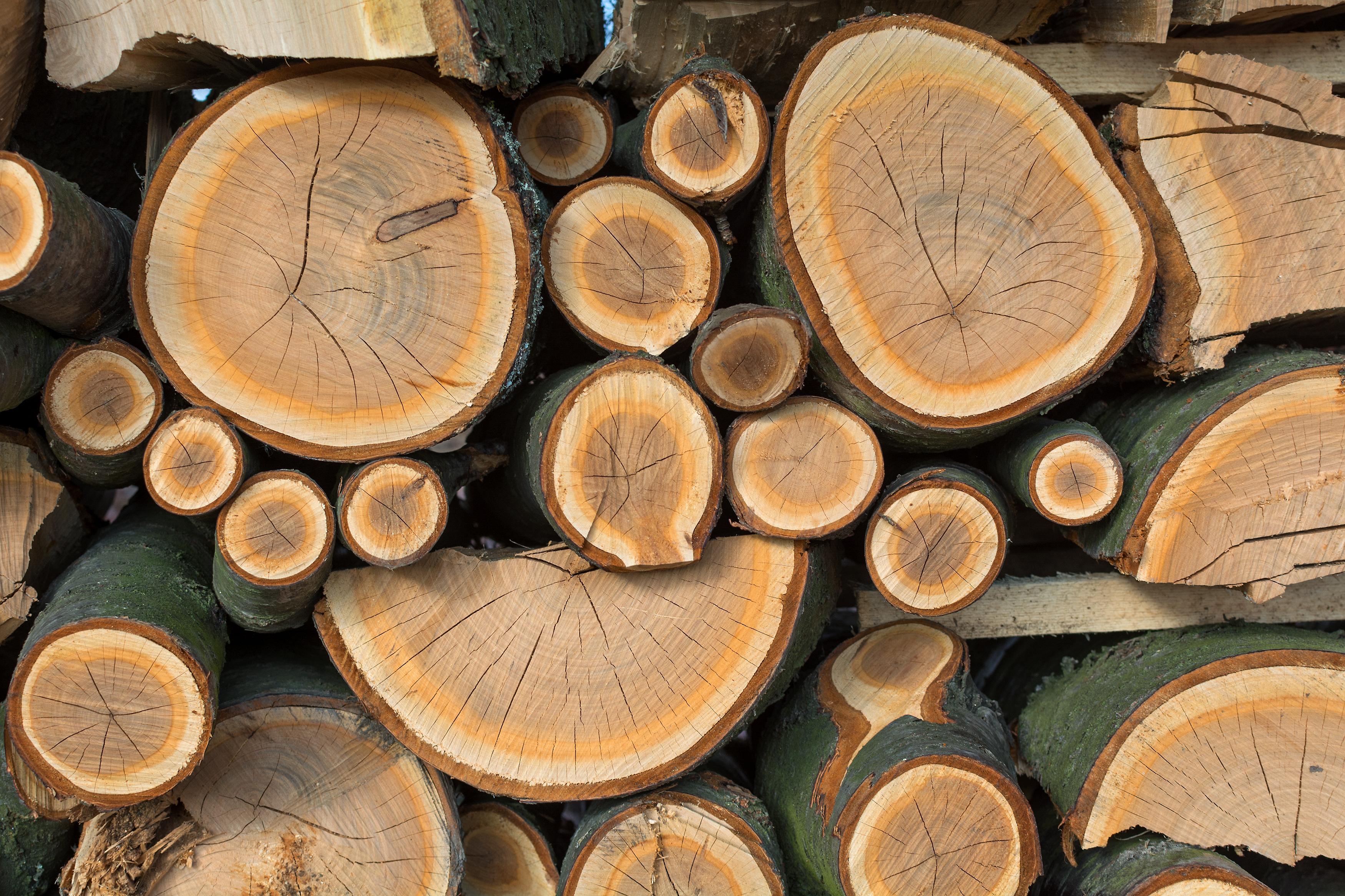 FREE IMAGE: Wood - Libreshot Public Domain Photos