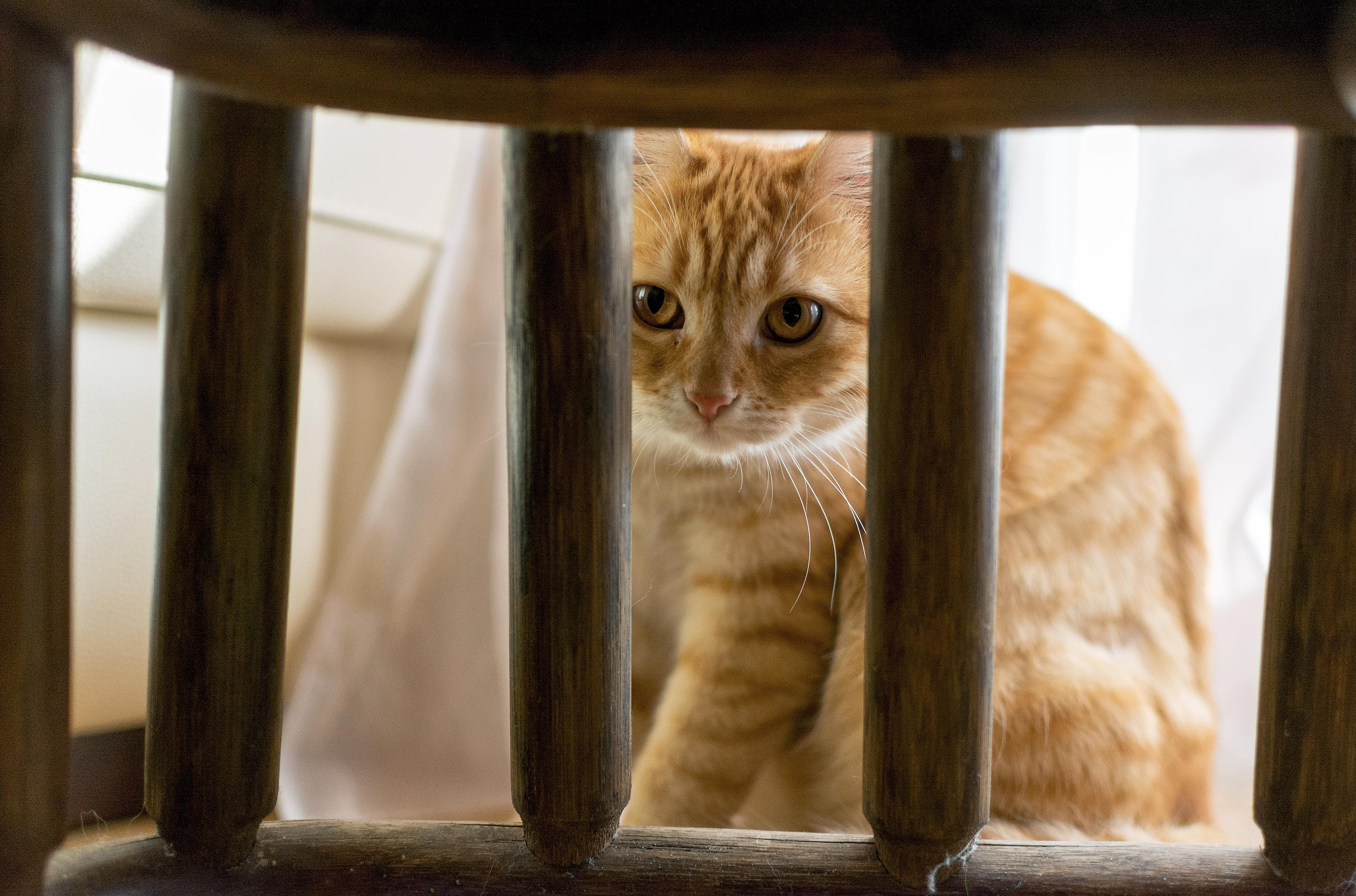 Hidden Cat Free Stock Photo Libreshot