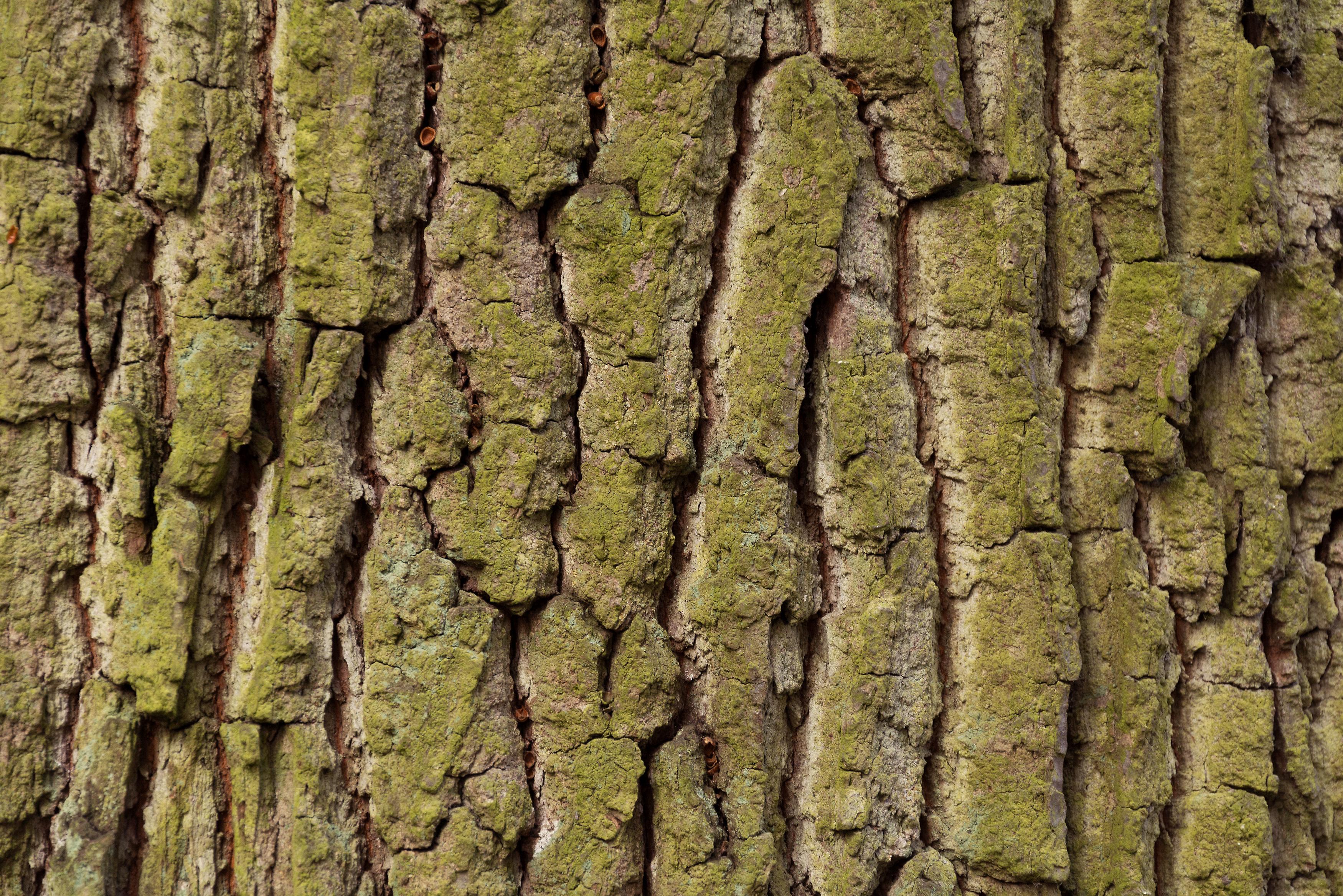 Tree bark texture | FREE image on LibreShot