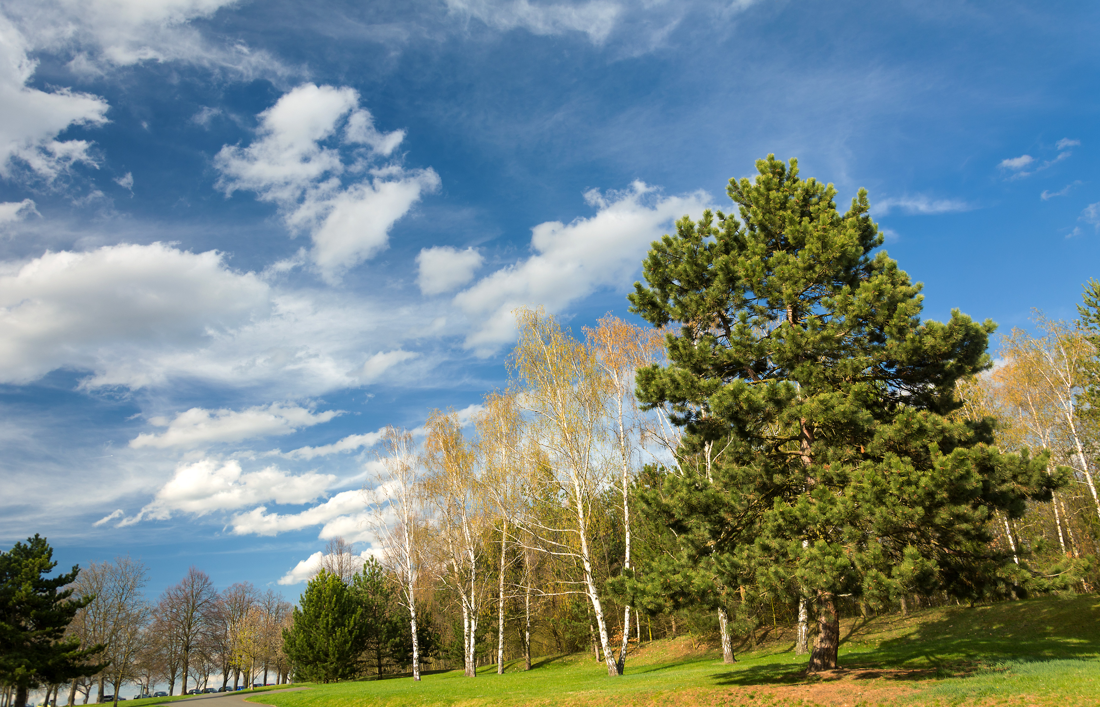 Landscape With Trees Free Stock Photo Libreshot
