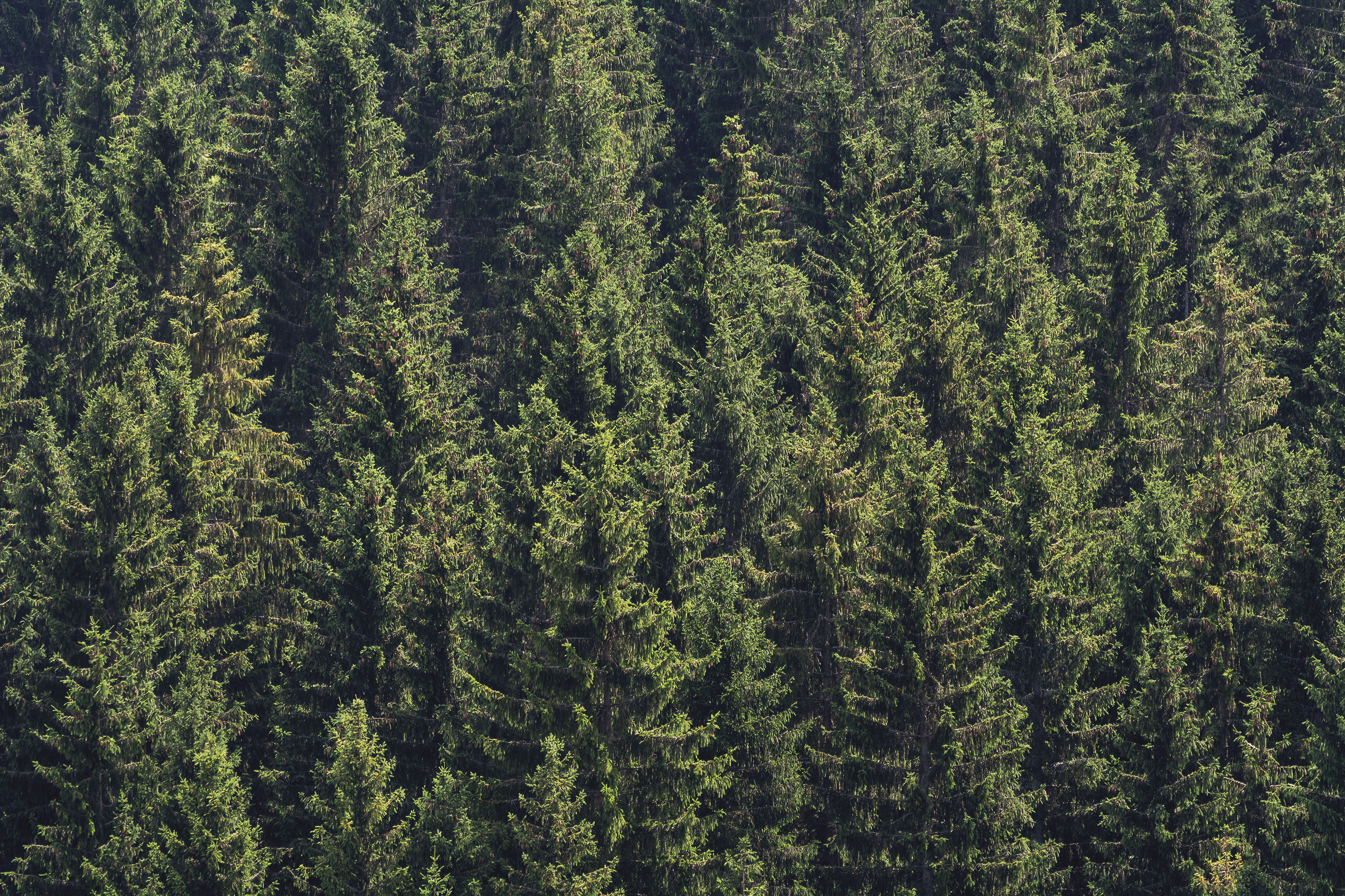 Forest Background Free Stock Photo Libreshot