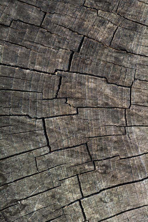 Cut Wood Structure
